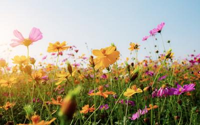 Doenças da Primavera
