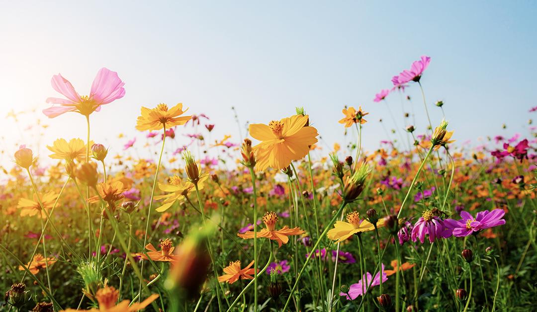 Doenças comuns na Primavera